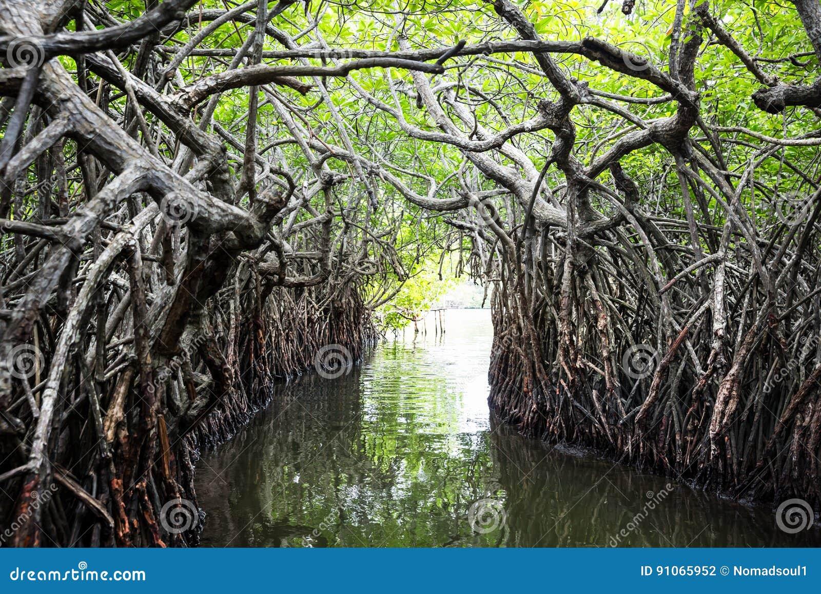 Wildernisrivier en tropische mangroven op Ceylon