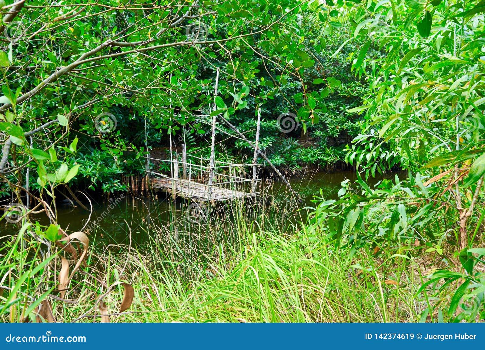 Wildernisrivier met weinig houten pijler op het in Kambodja kampot