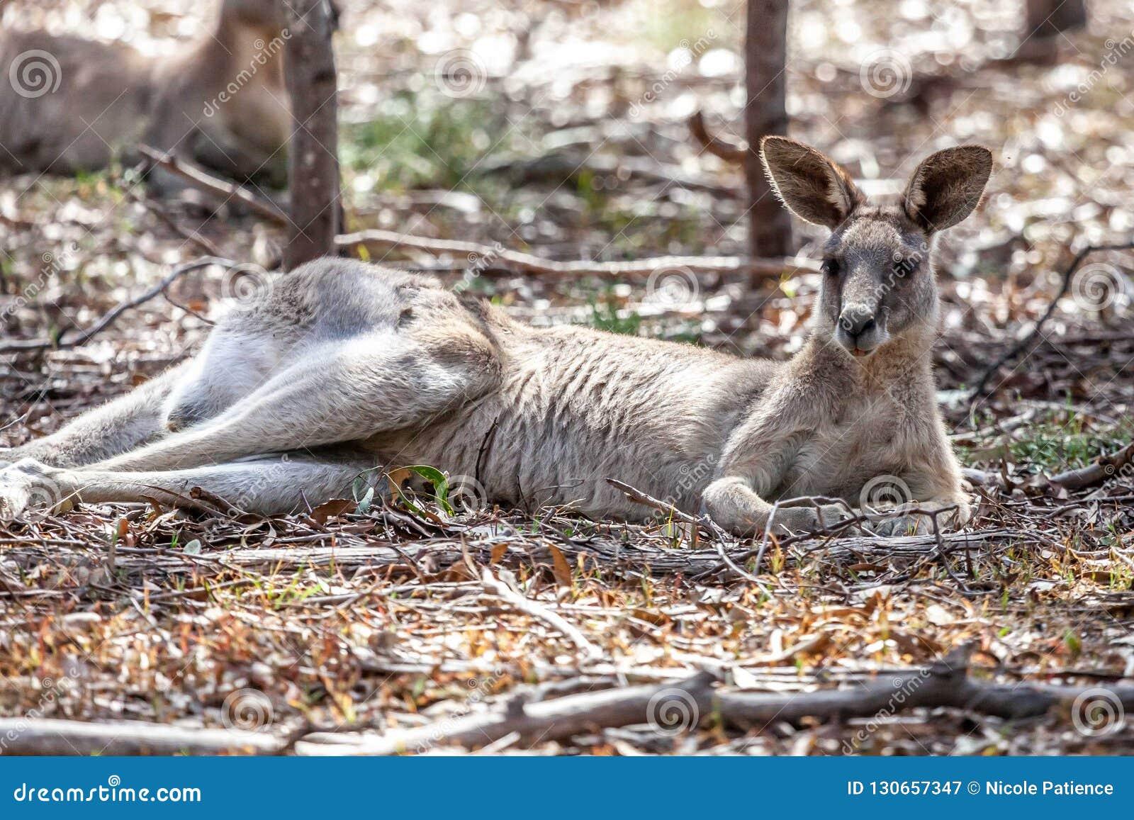 Australien Im November