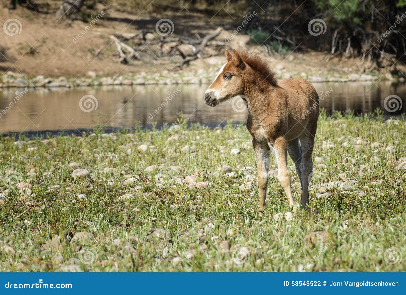 Wildes Pferd
