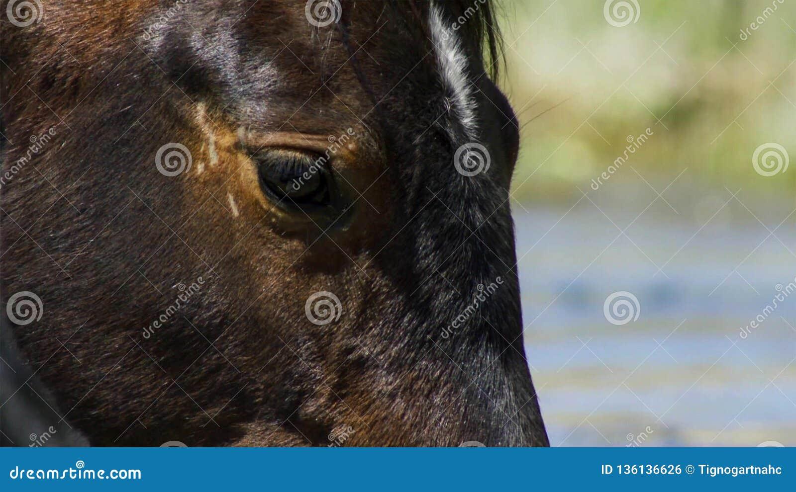 Wildes Pferd, gemalter Mustangabschluß oben des schönen blauen Auges Dayton, Nevada