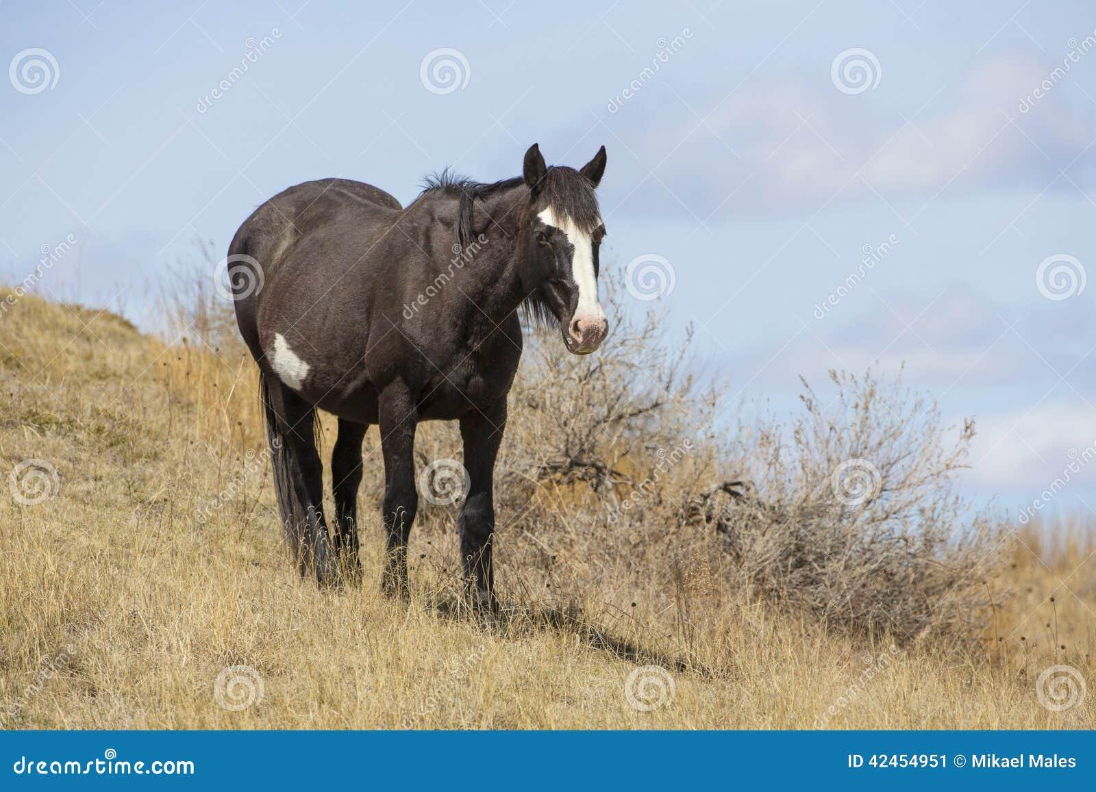 Wildes Pferd in Nationalpark Roosevelts