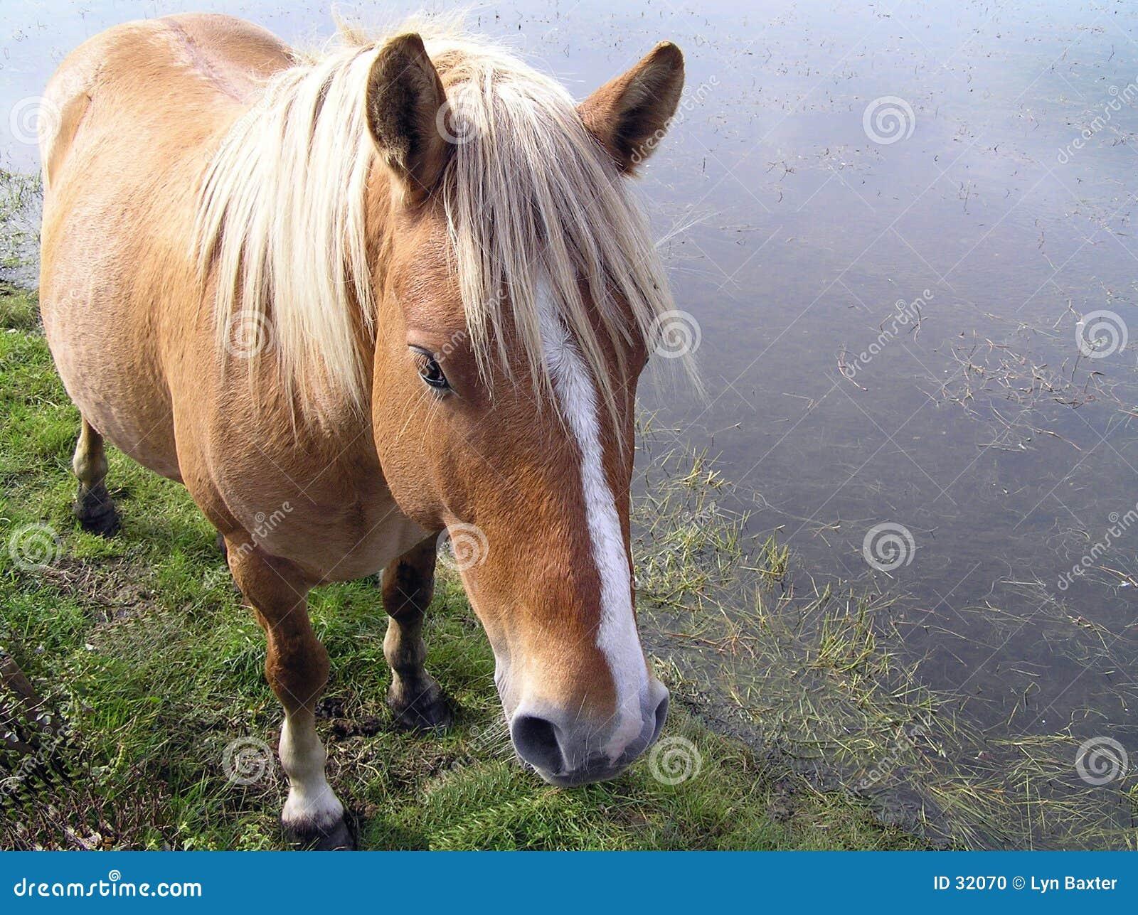 Wildes Pony
