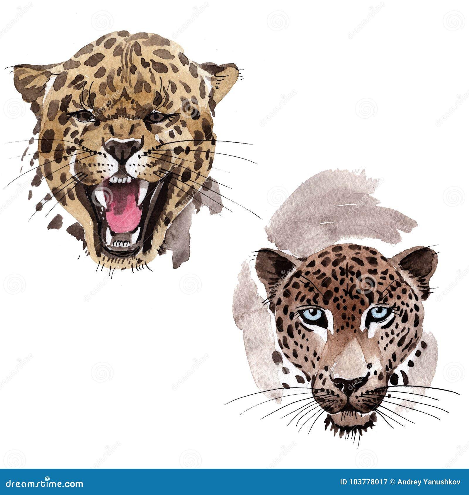 Wildes Tier des exotischen Leoparden in einer Aquarellart lokalisiert