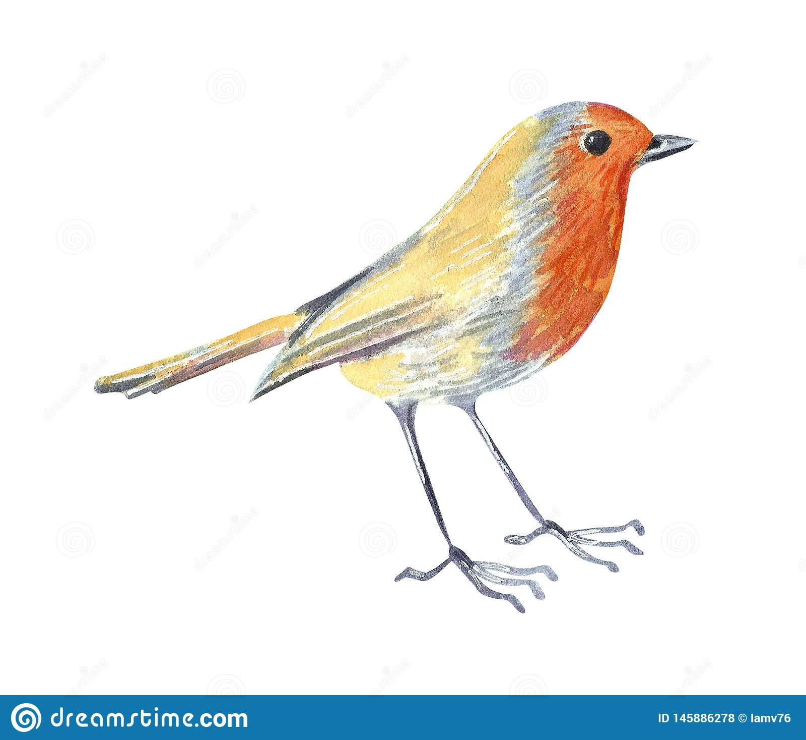 Wildes Vogelrotkehlchen des kleinen Gartens Hand gezeichnete Aquarellillustration