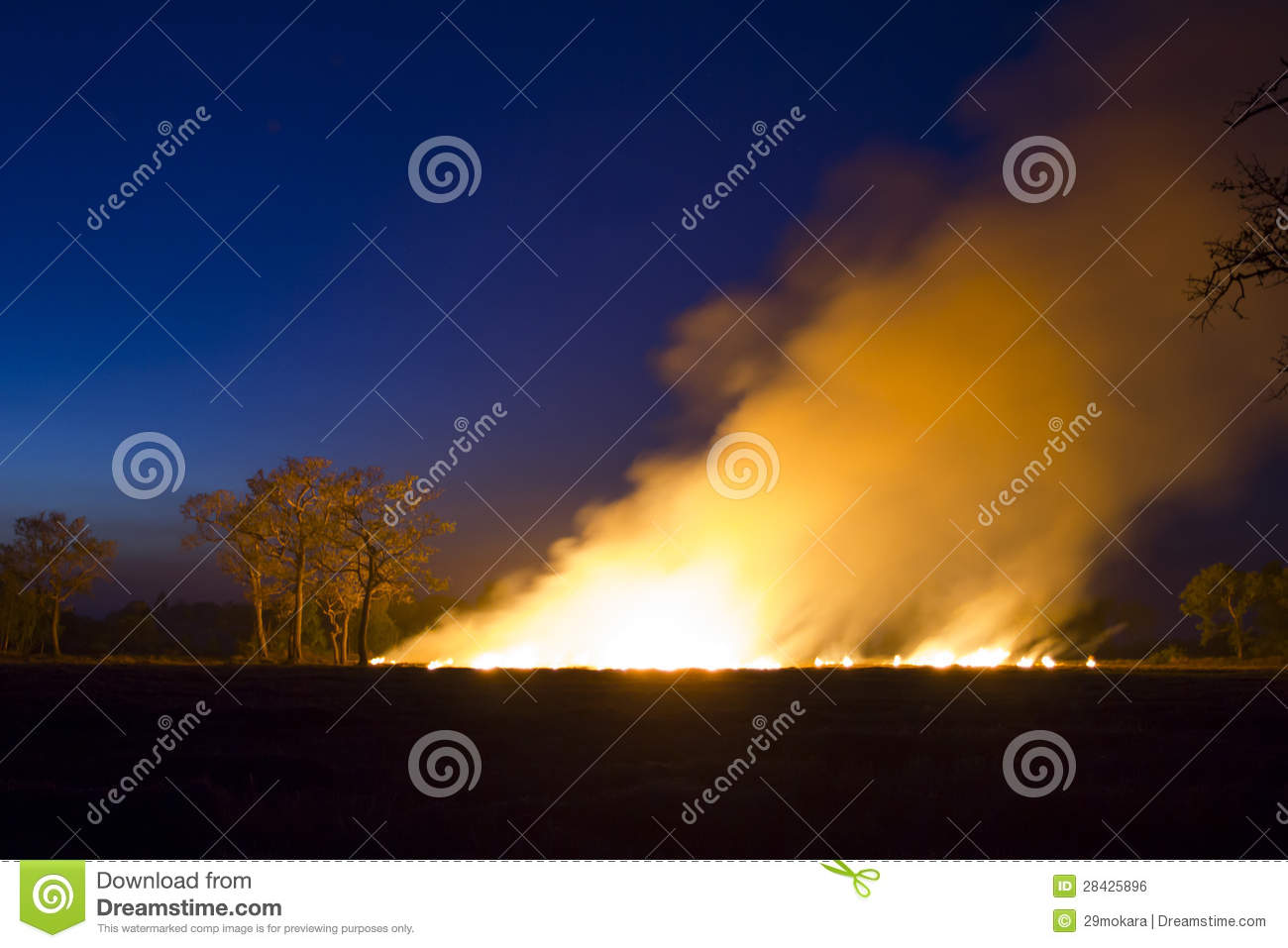 Wildfire Burning forest ecosystem is destroyed