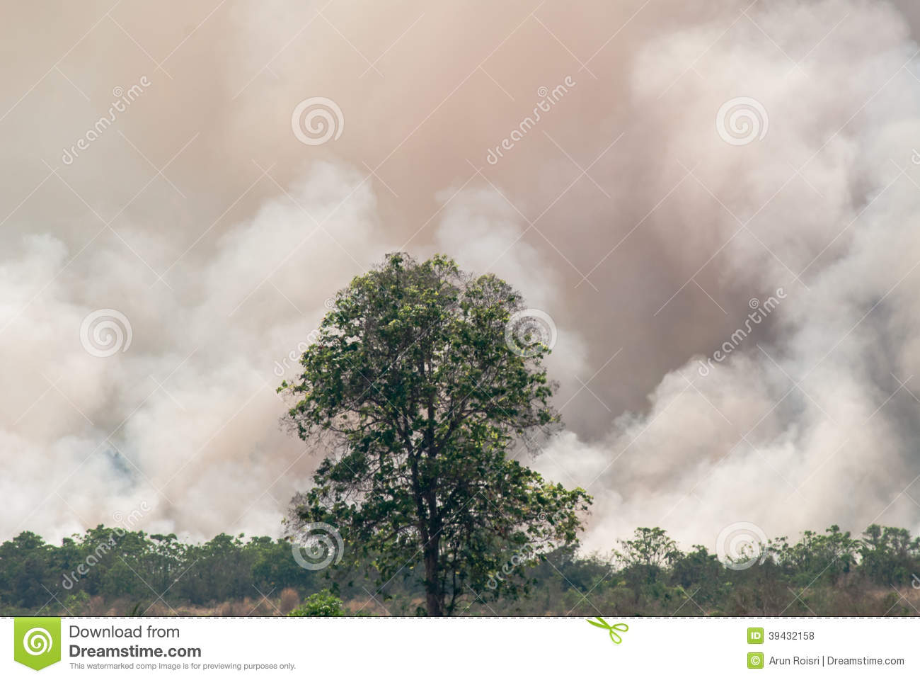 Wildfire - Burning forest ecosystem is destroyed