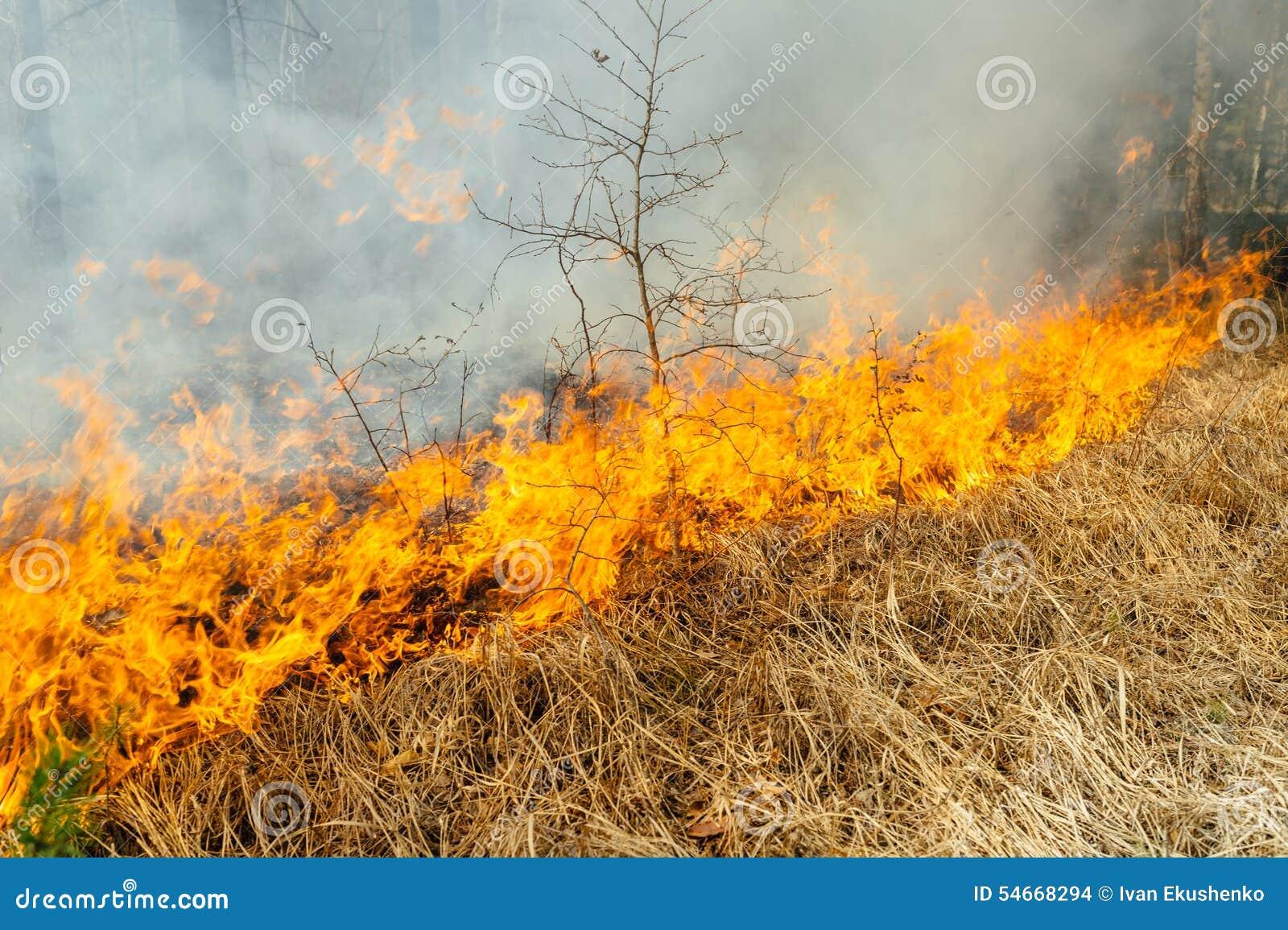 Wildfire Stock Photo Image 54668294