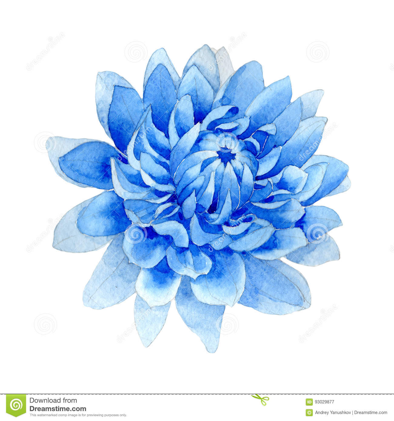 Wildflower blue dahila flower in a watercolor style isolated.