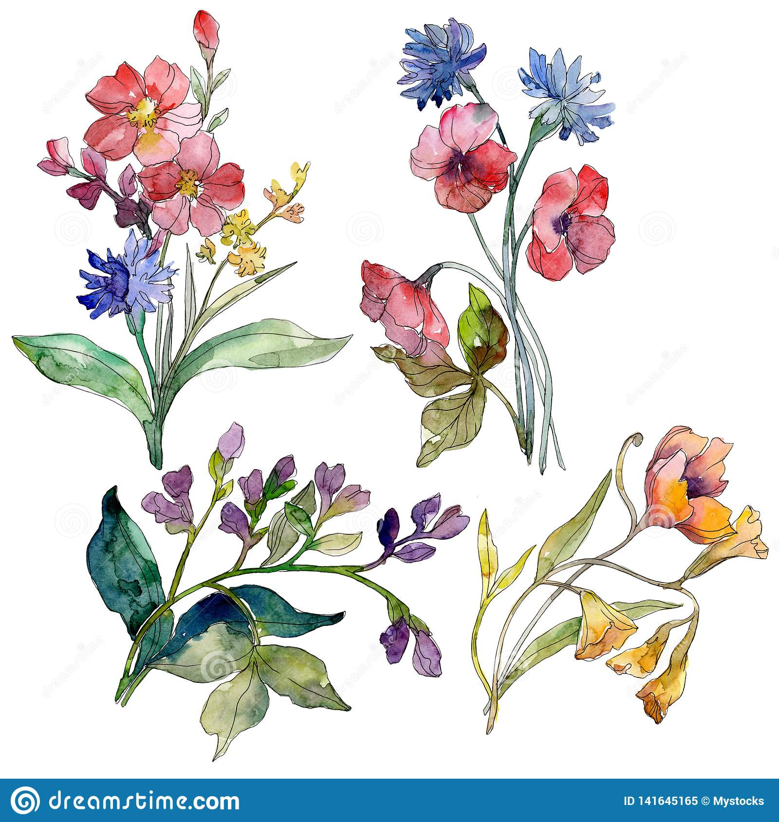 Wildflower Bouquet Floral Botanical Flowers Watercolor Background Set Isolated Wildflowers Illustration Element Stock Illustration Illustration Of Phlox Cyanus 141645165