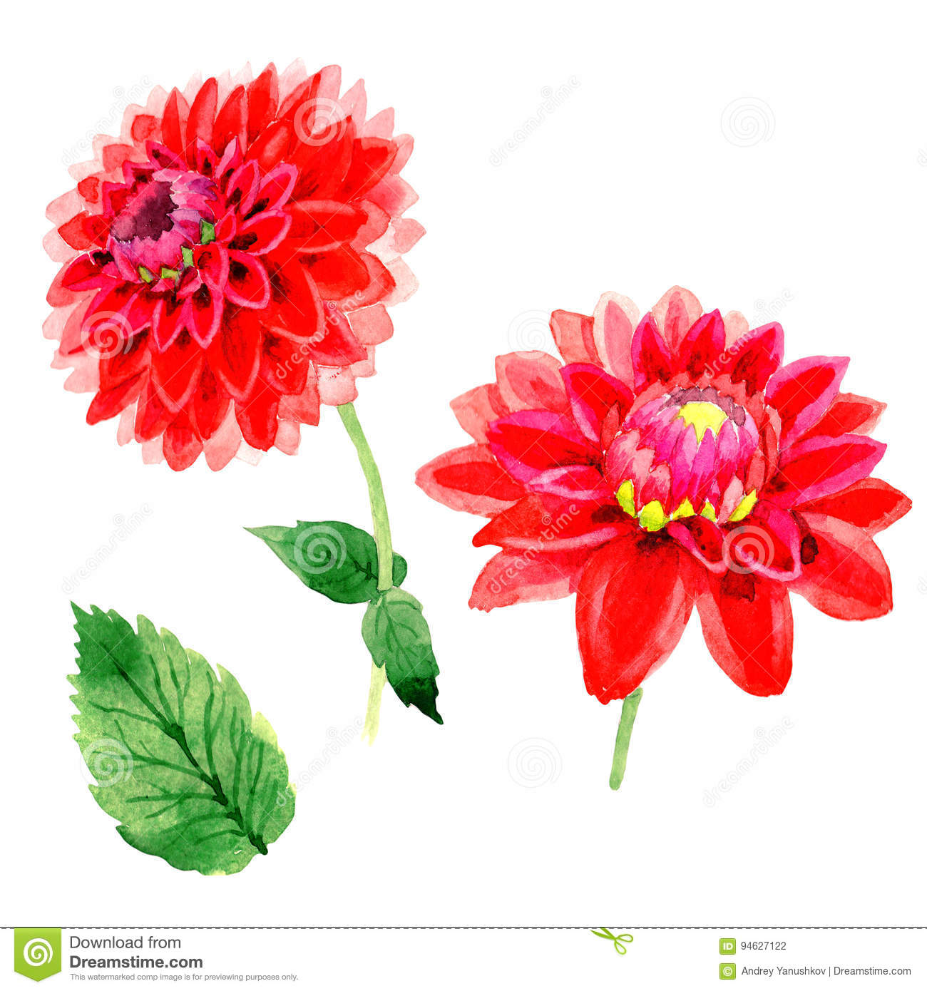 Wildflower Dahlia Flower In A Watercolor Style Isolated Stock