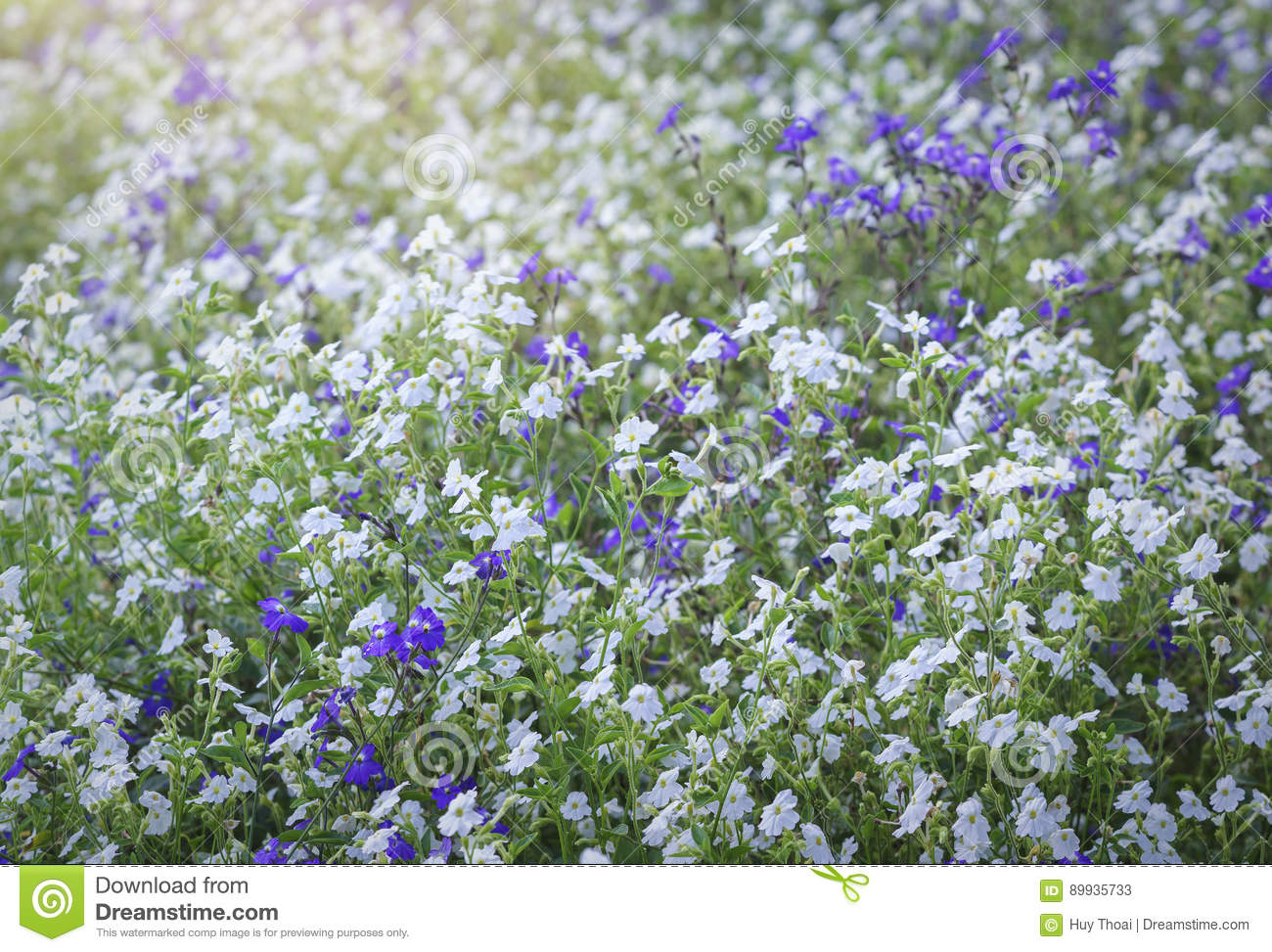 Wildflower Field In The Afternoon Light Fades Stock Image Image Of
