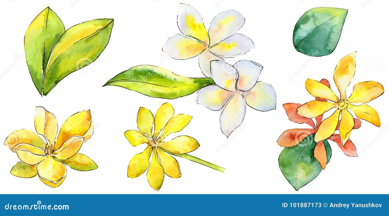 Wildflower gardenia flower in a watercolor style isolated stock download wildflower gardenia flower in a watercolor style isolated stock illustration illustration of hawaiian izmirmasajfo