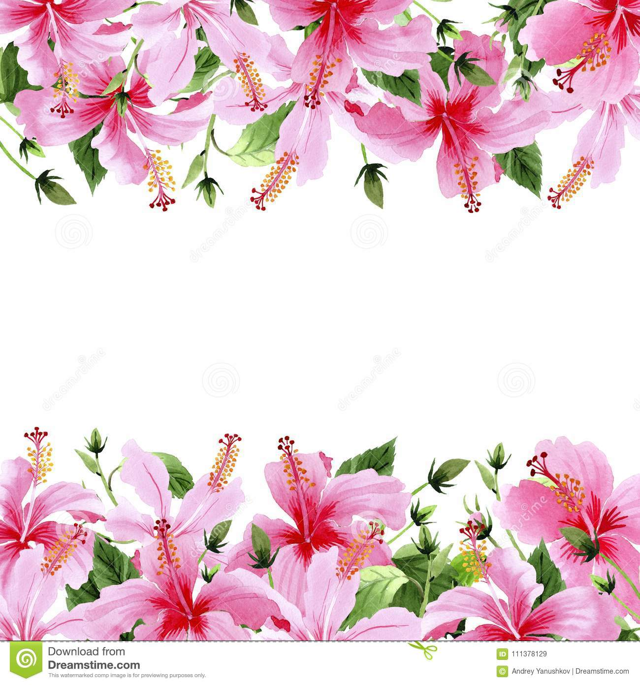 Wildflower hibiscus pink flower frame in a watercolor style stock wildflower hibiscus pink flower frame in a watercolor style full name of the plant hibiscus aquarelle wild flower for background texture mightylinksfo