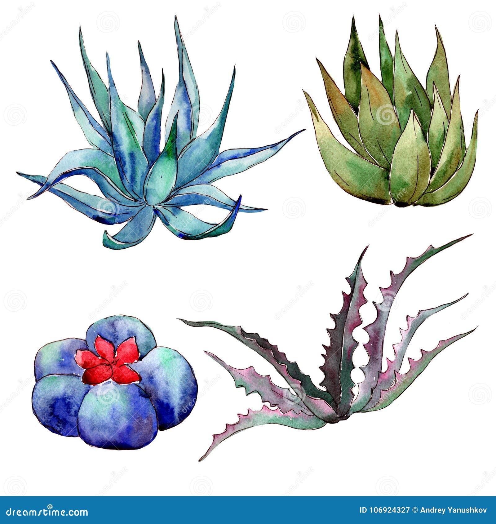 Wildflower kaktus w akwarela stylu odizolowywającym