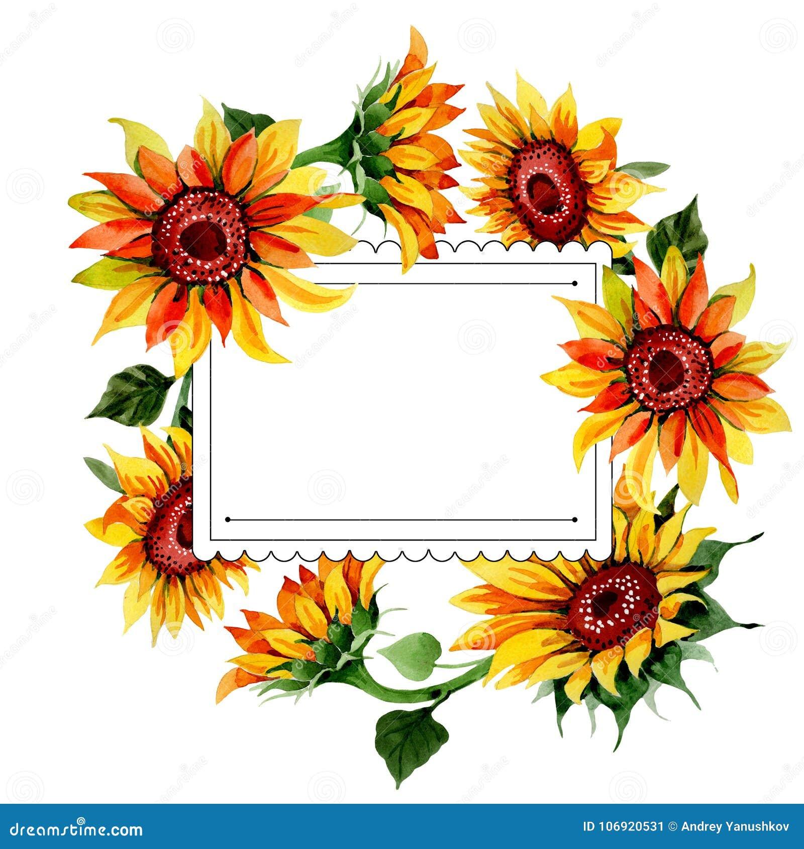 Wildflower kwiatu słonecznikowa rama w akwarela stylu