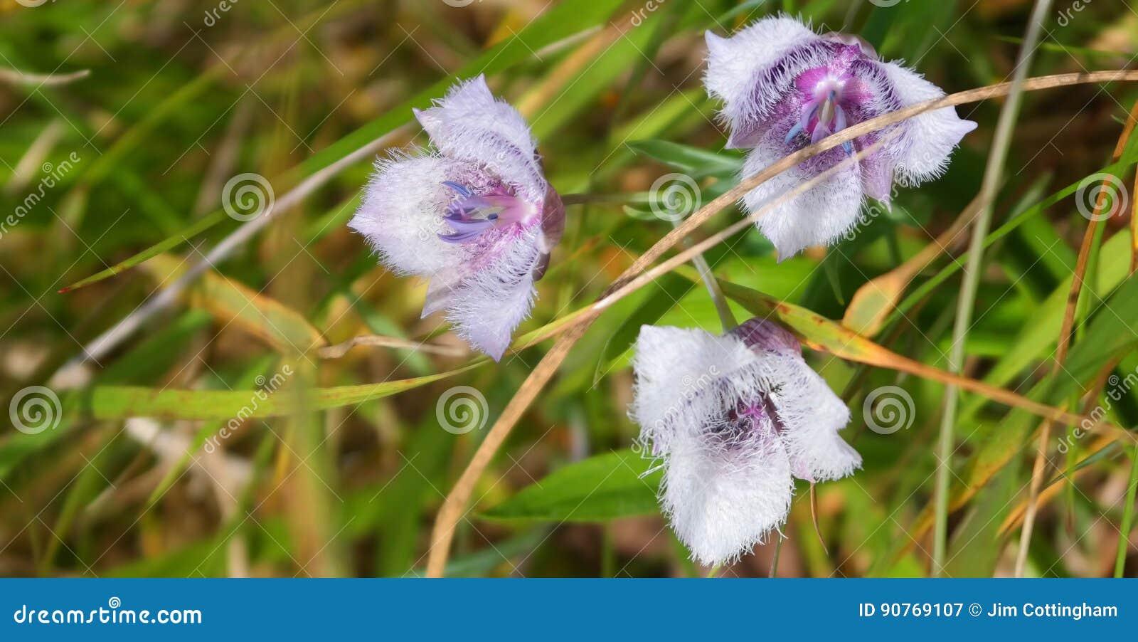 Wildflower litoral de Oregon
