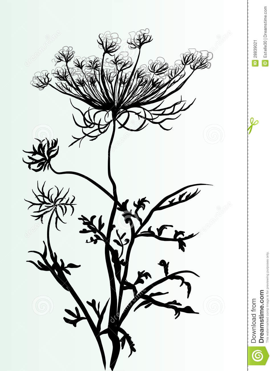 Wildflower Line Drawing : Wildflower outline stock image