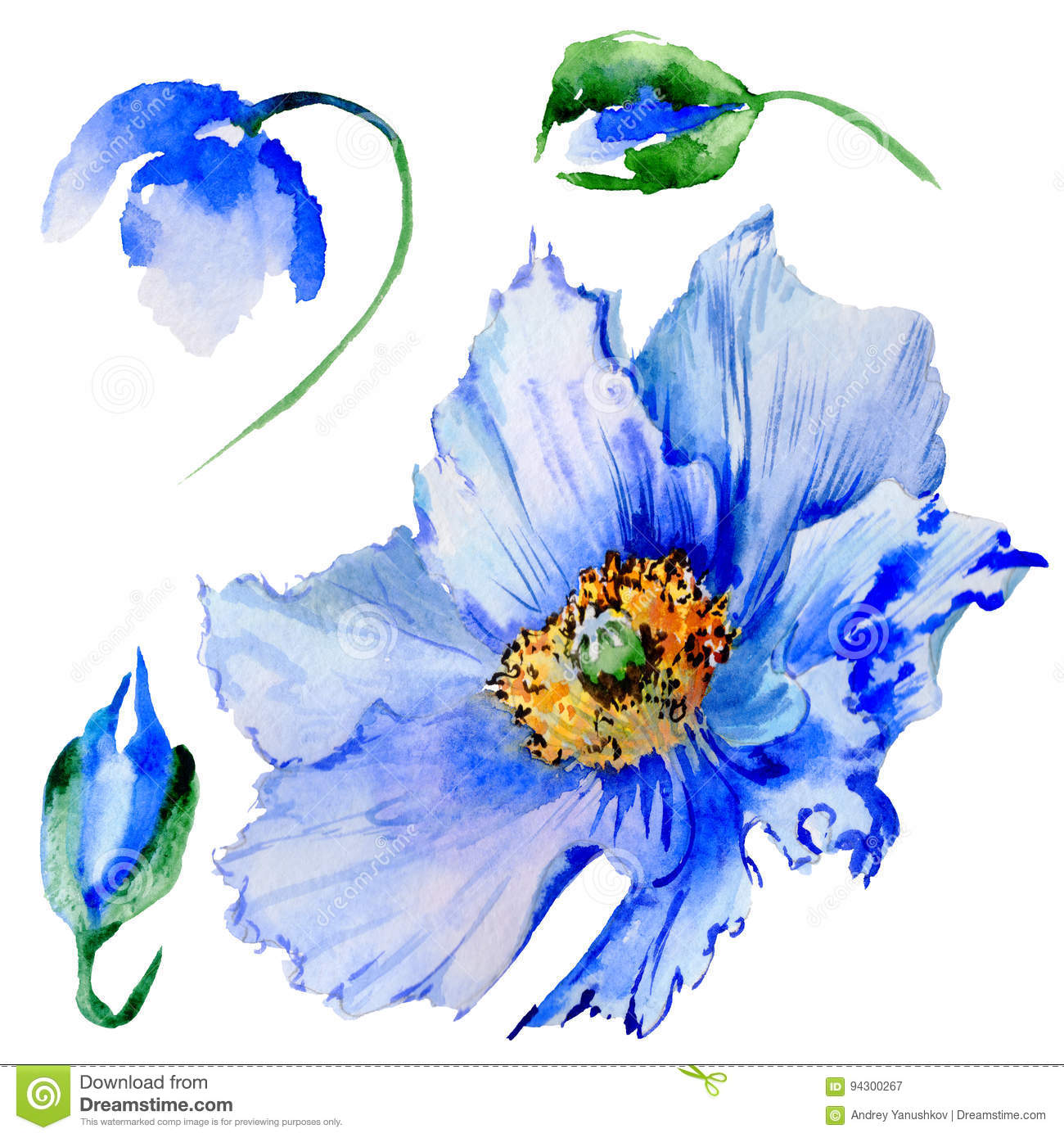 Wildflower Poppy Flower In A Watercolor Style Stock Illustration