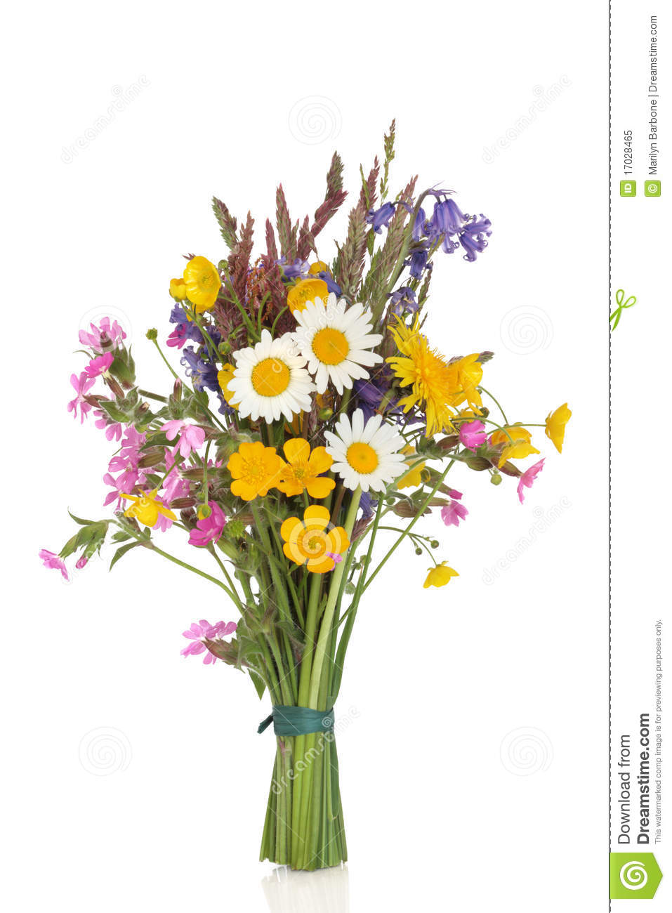 wildflower posy stock image image of bouquet bluebells