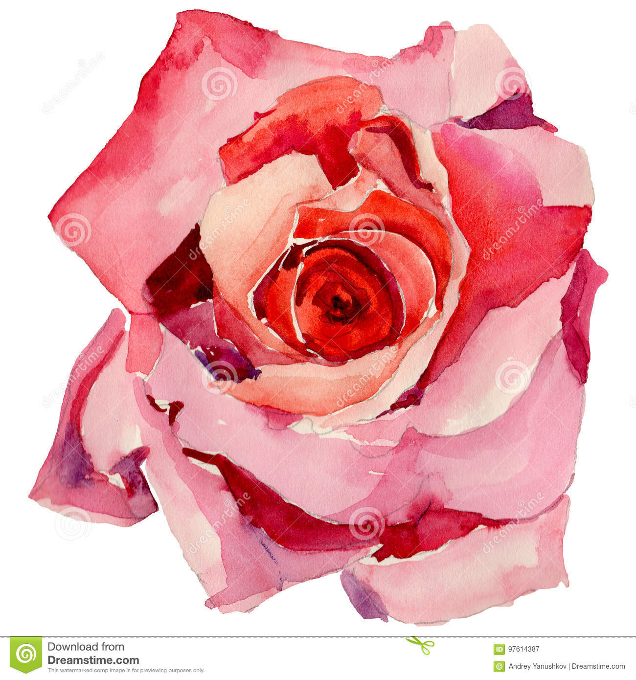 Wildflower Rose Flower In A Watercolor Style Isolated Stock