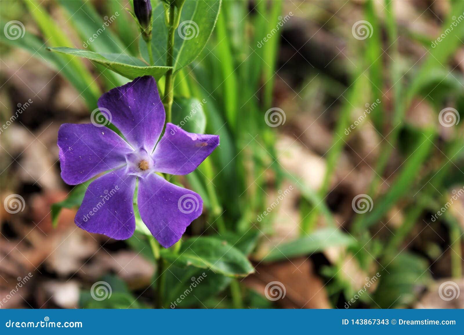 Wildflower Violet Purple com descentralizado esquerdo