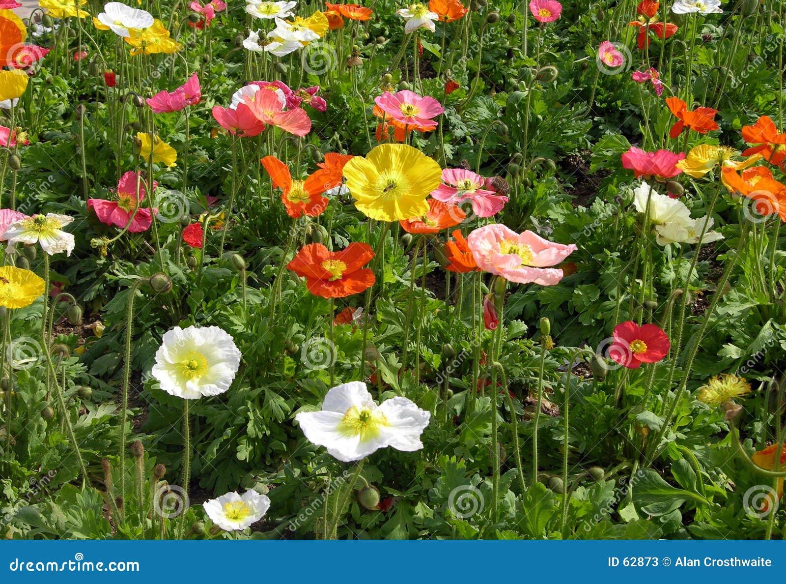 Download Wildflowers άνοιξη στοκ εικόνα. εικόνα από λουλούδι, άνοιξη - 62873