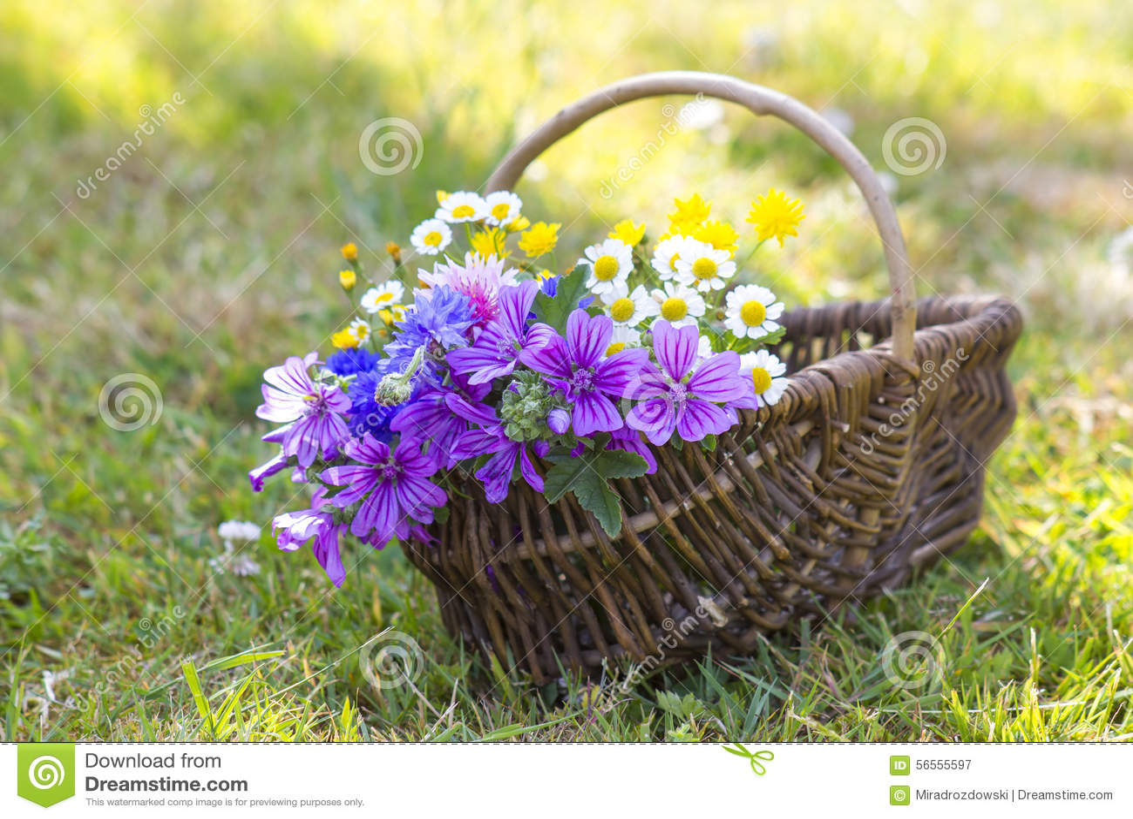 Download Wildflowers σε ένα καλάθι στοκ εικόνα. εικόνα από ζωηρόχρωμος - 56555597