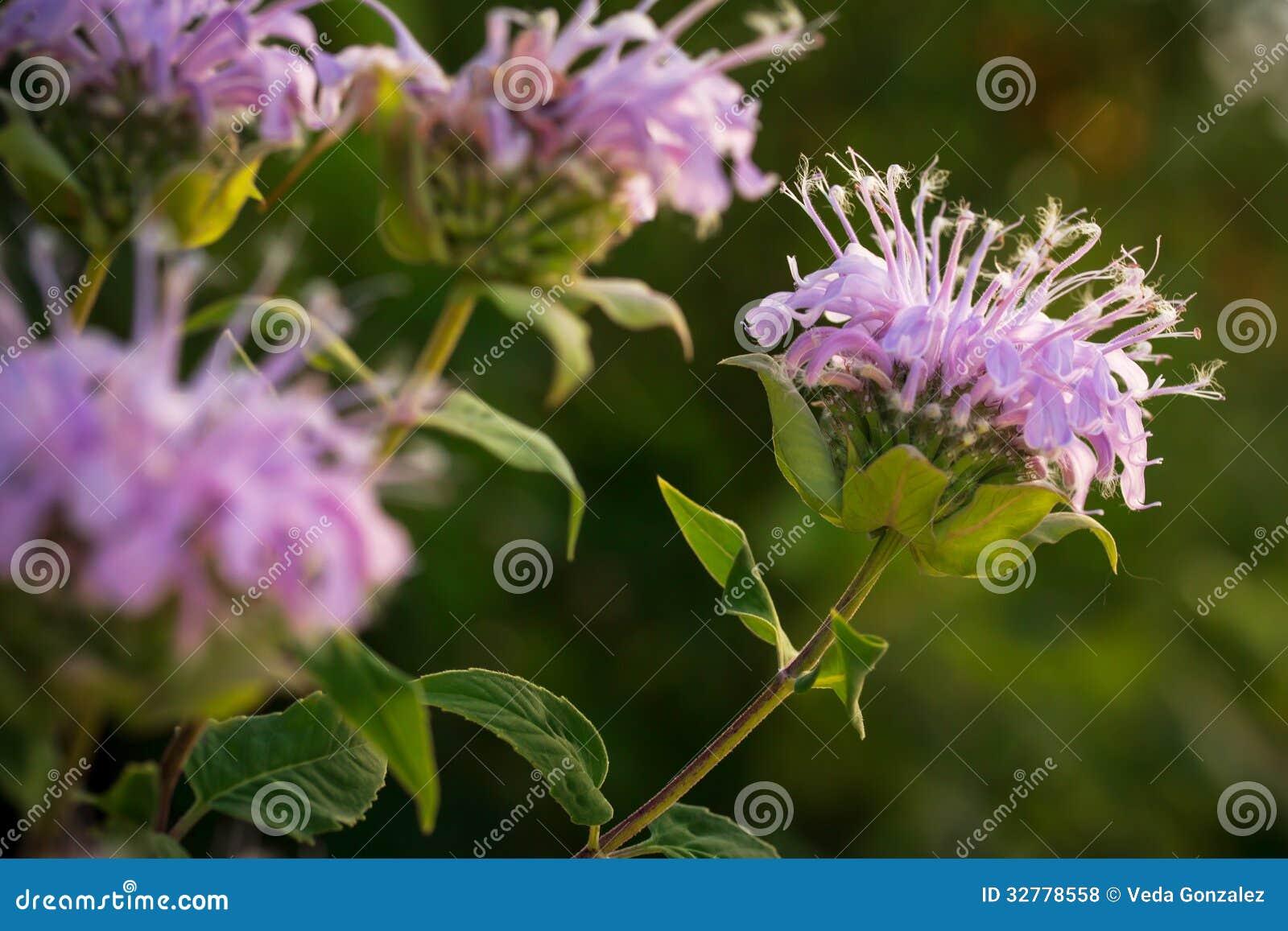 Wildflowers στο Μισσούρι