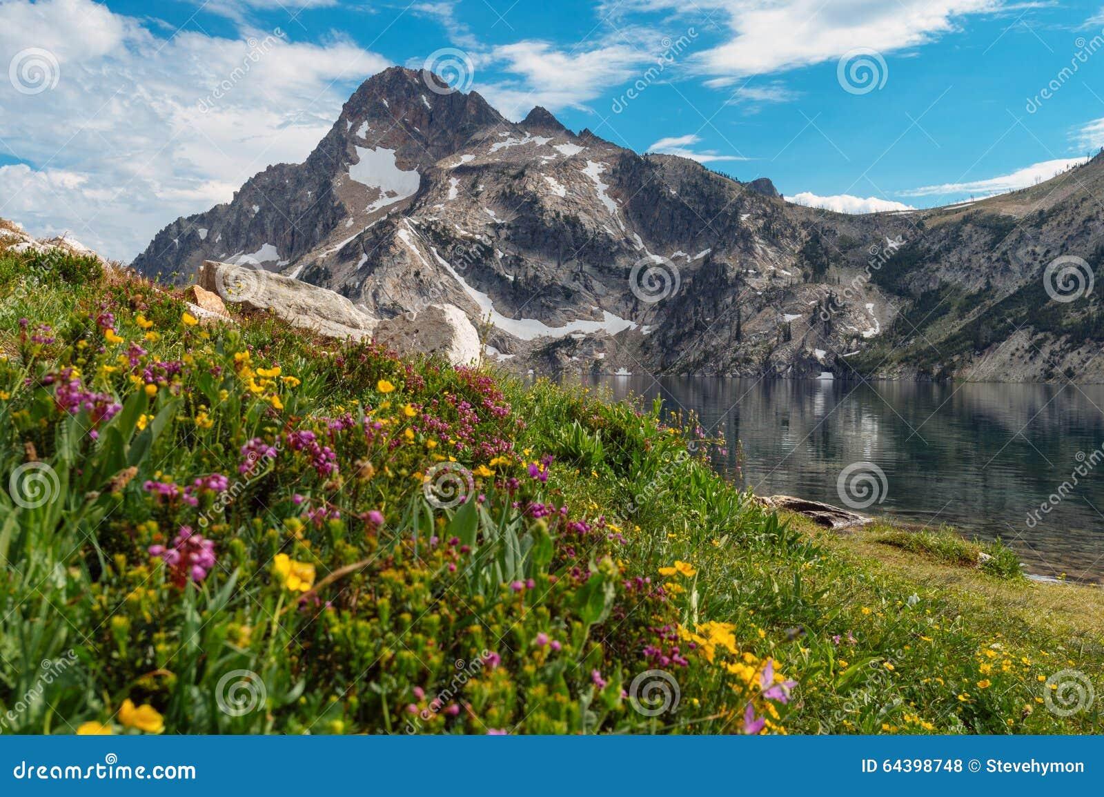Wildflowers au lac sawtooth, Idaho