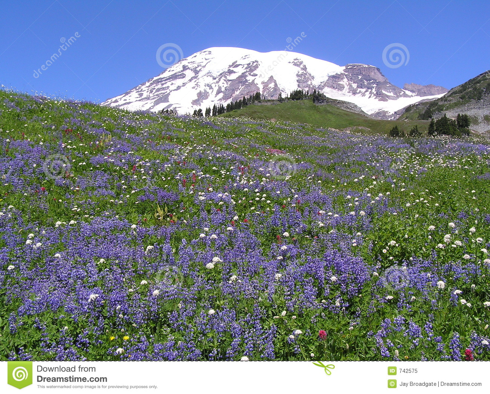 Wildflowers au Mt. plus pluvieux