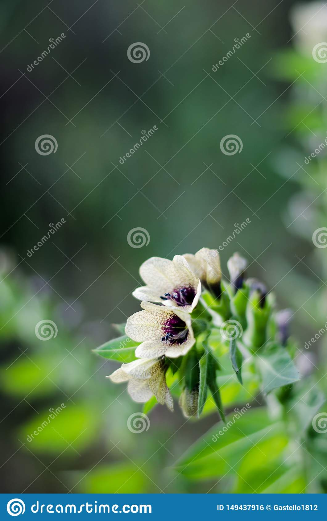 Light flowers of the bell with an unusual pattern on the petals. Texture pattern. Macro. Blurred Background