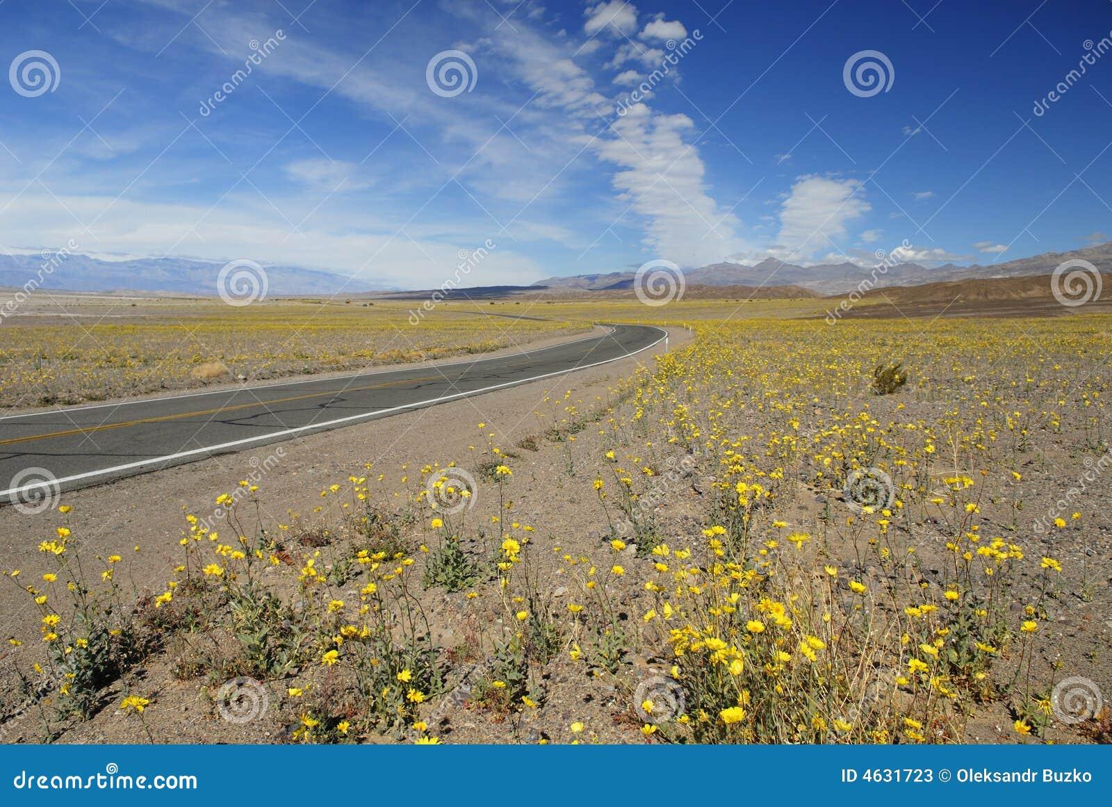 Wildflowers da mola em Death Valley