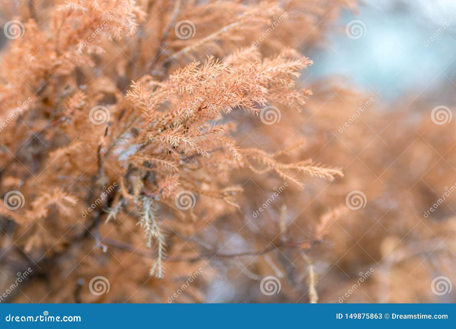 Wildflowers de pin, jaunes et violets secs Image modifi?e la tonalit?