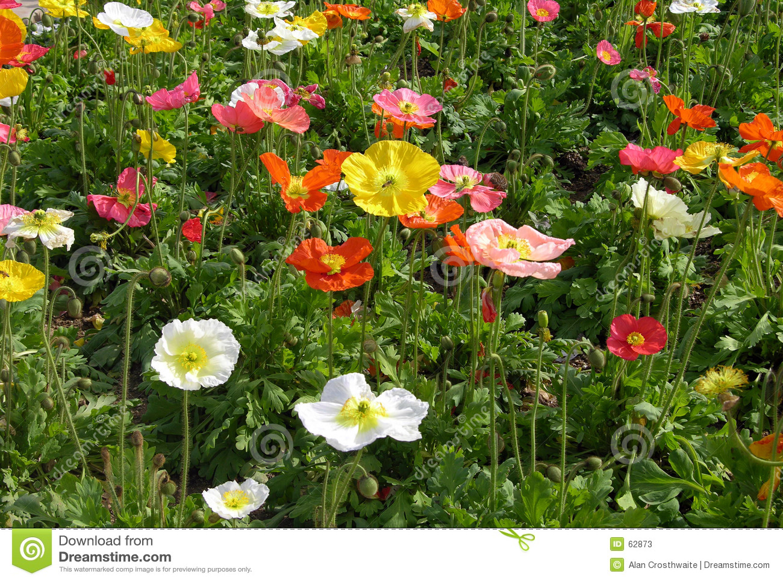 Wildflowers del resorte