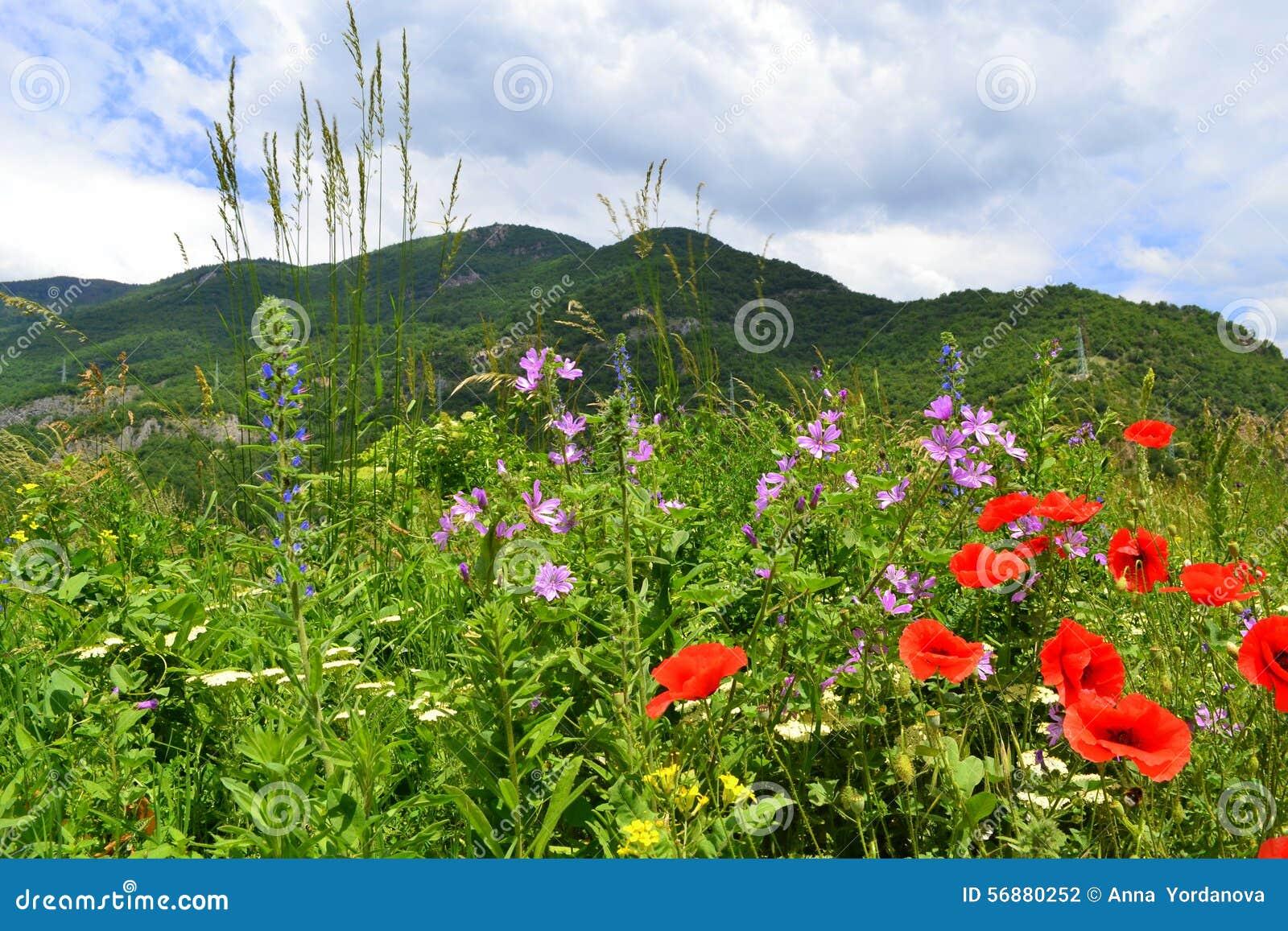 Wildflowers della montagna di estate