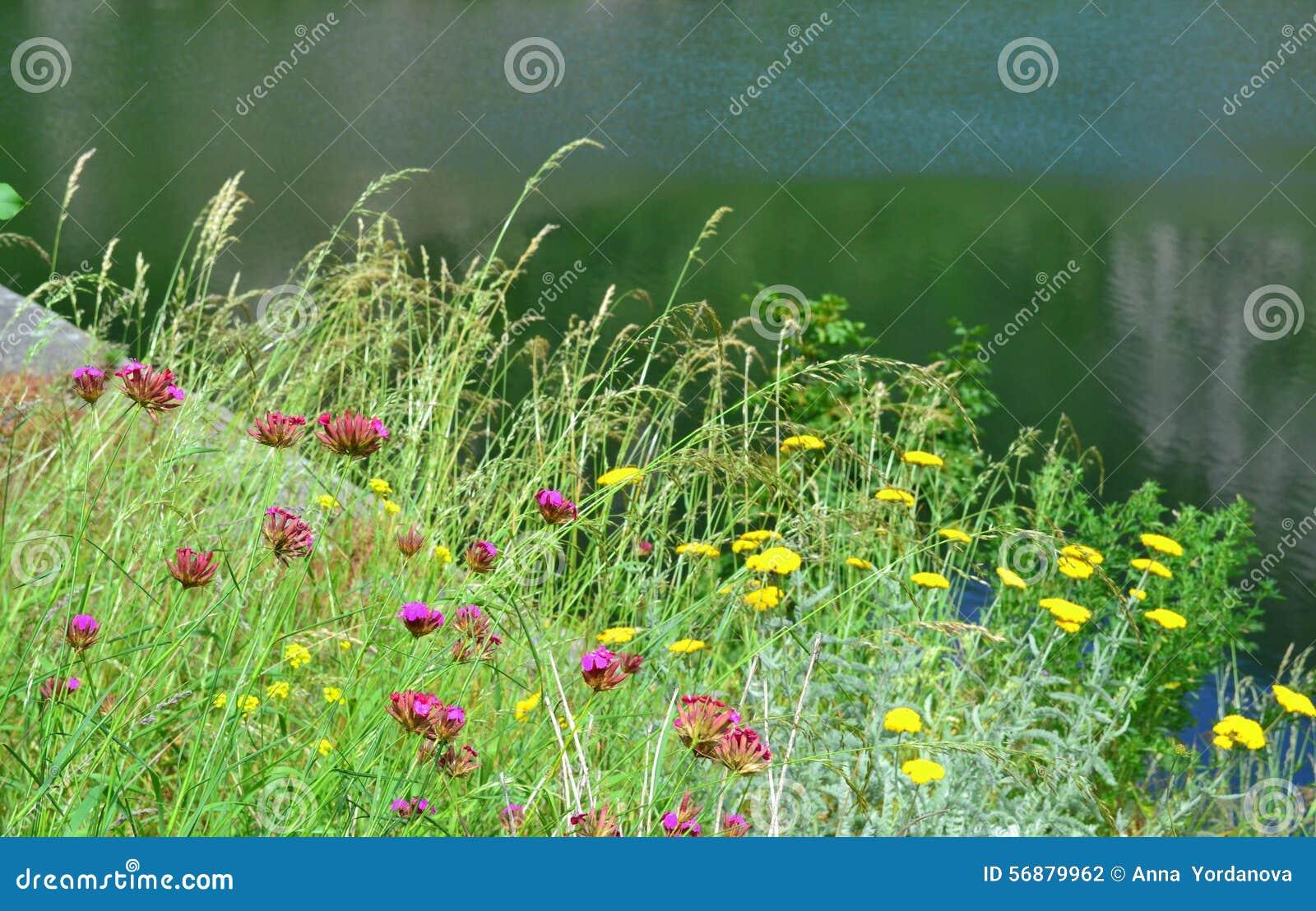 Wildflowers di estate di Lakeside