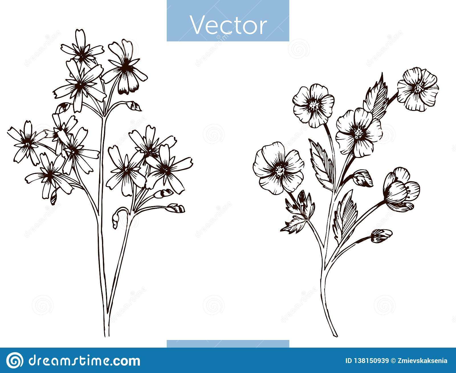 Wildflowers disegnati a mano di vettore monocromatico su fondo bianco