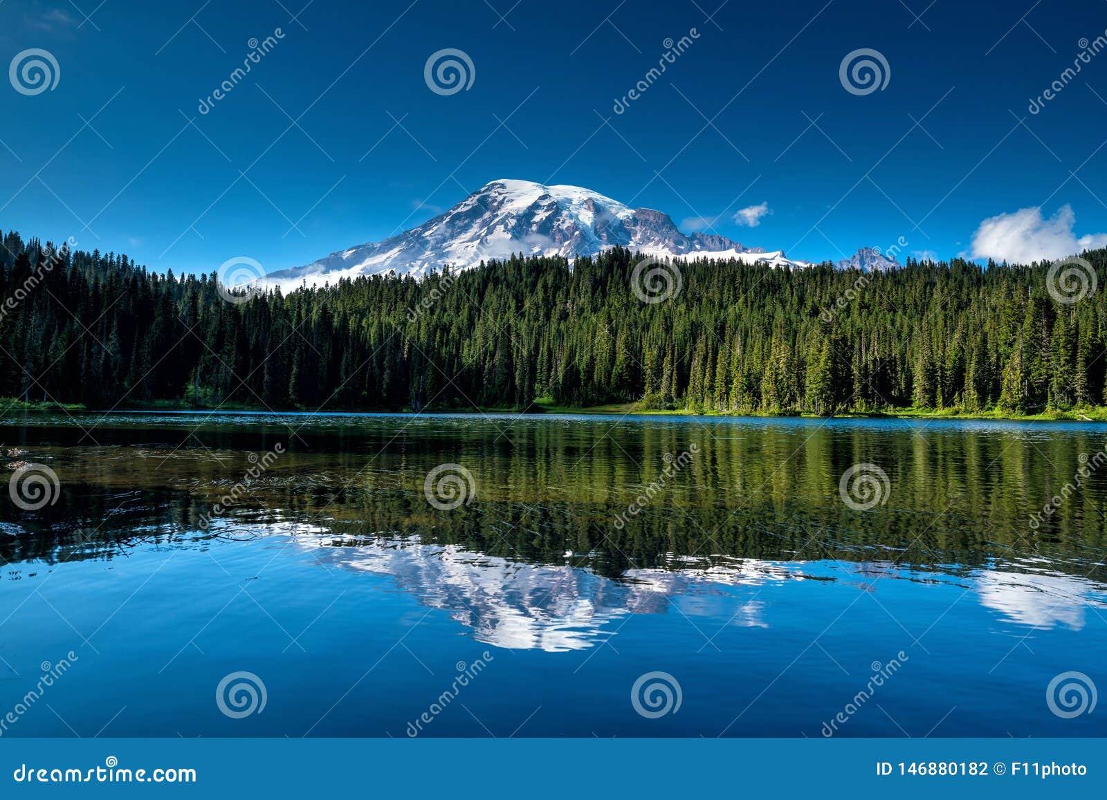 Wildflowers e o Monte Rainier bonitos, estado de Washington