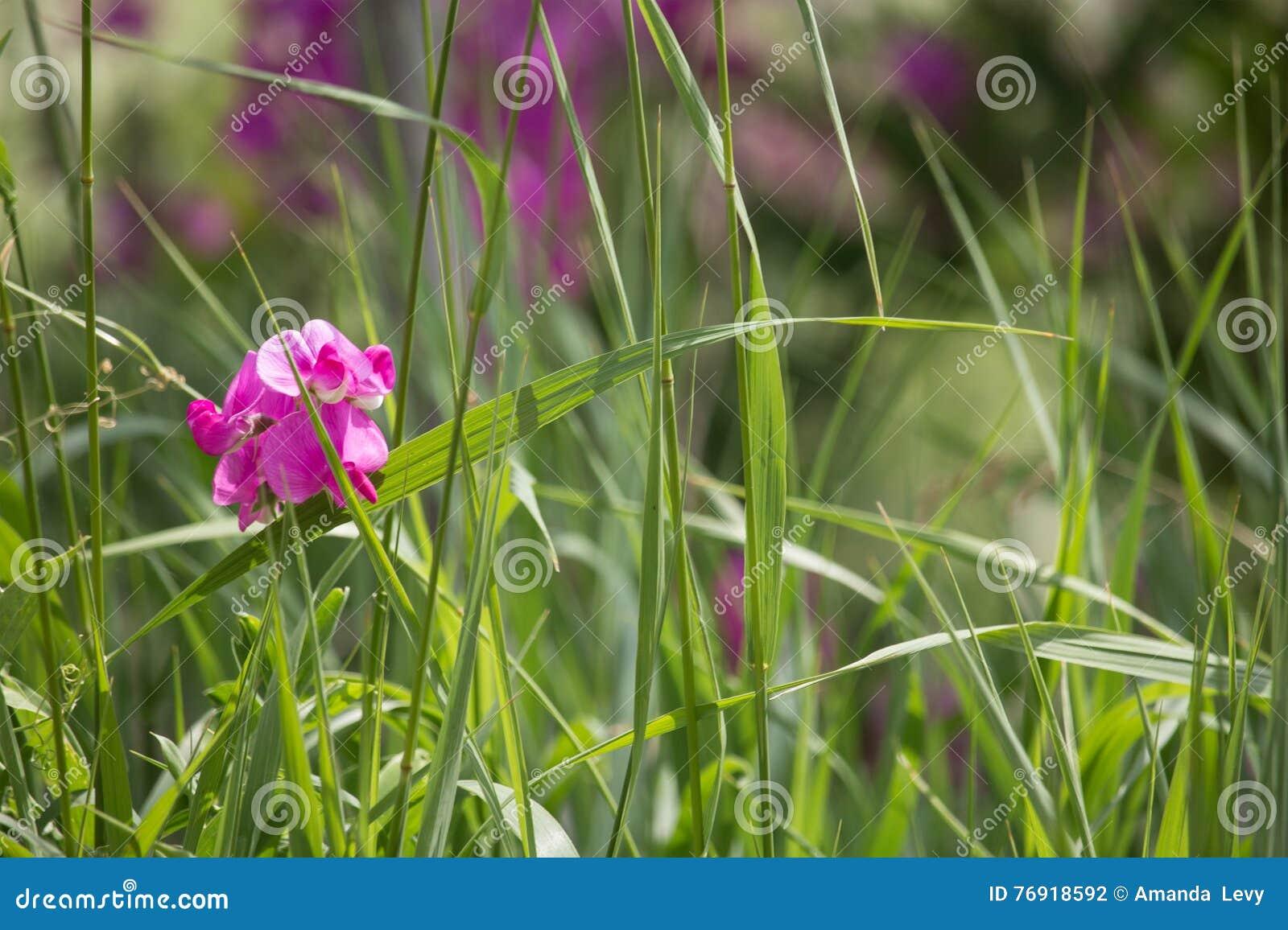 Wildflowers em um prado