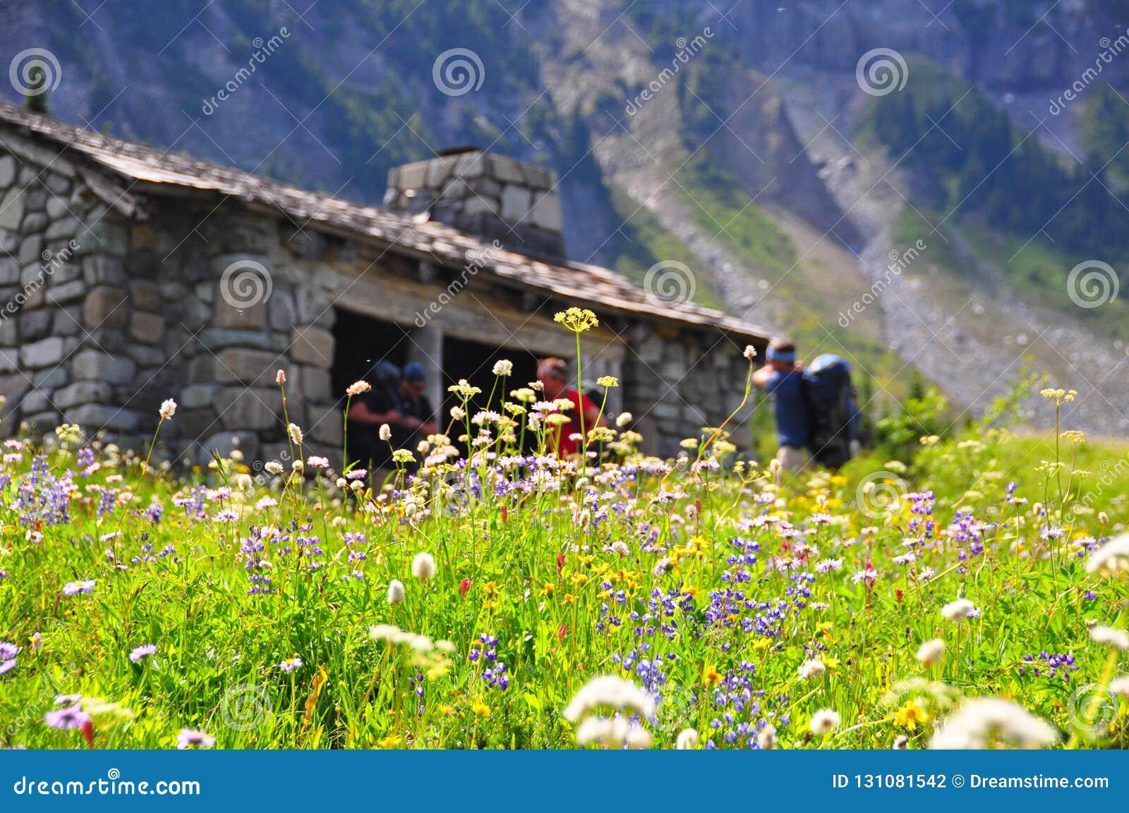 Wildflowers en el sitio para acampar indio del grupo de la barra en el soporte Rainier National Park