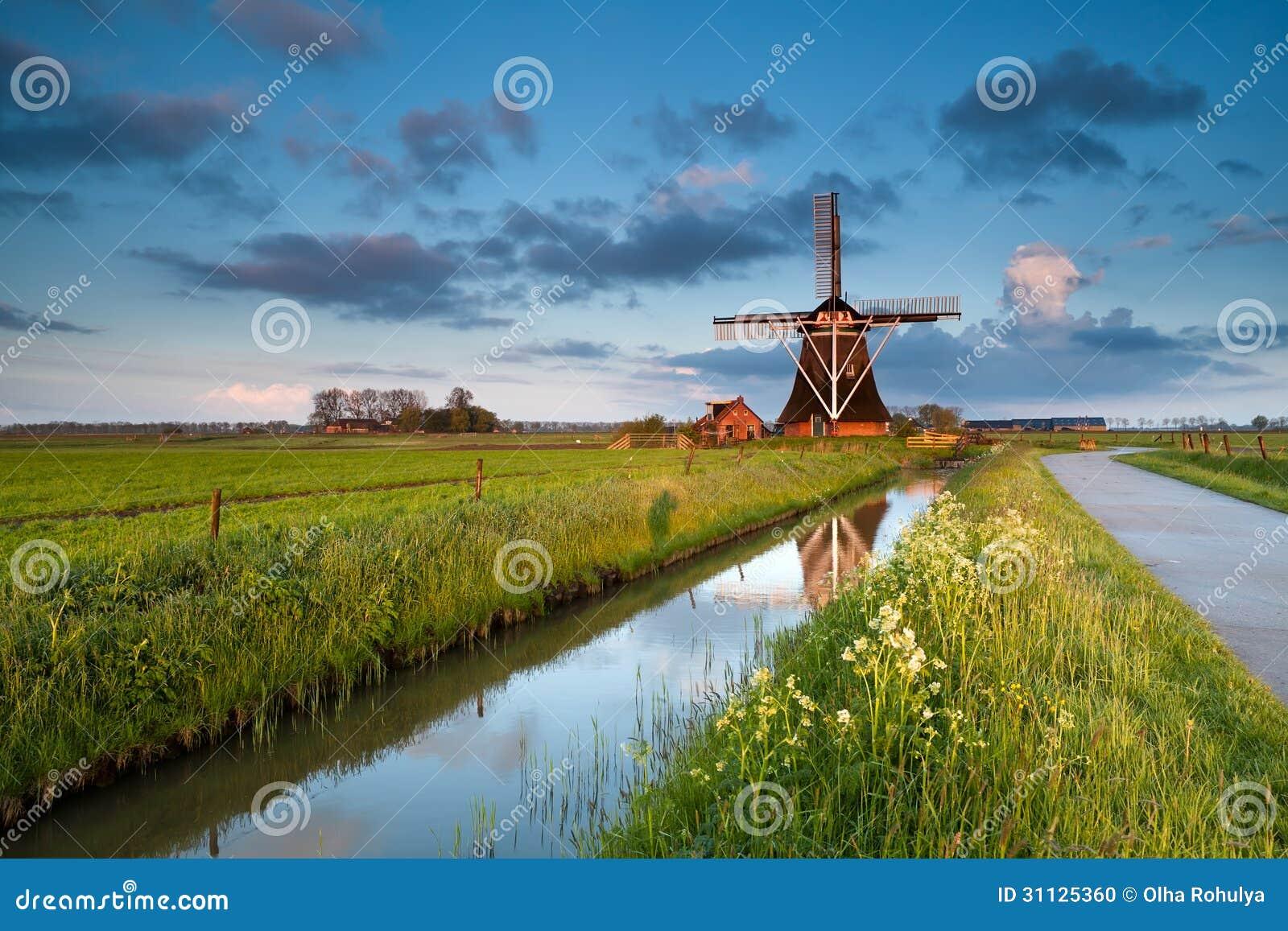 Wildflowers en Nederlandse windmolen bij zonsopgang