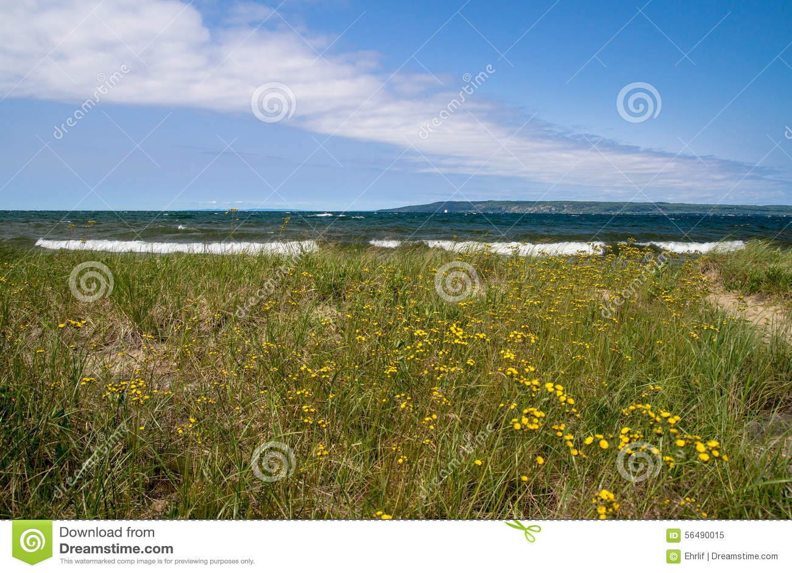 Wildflowers et plage du lac Supérieur