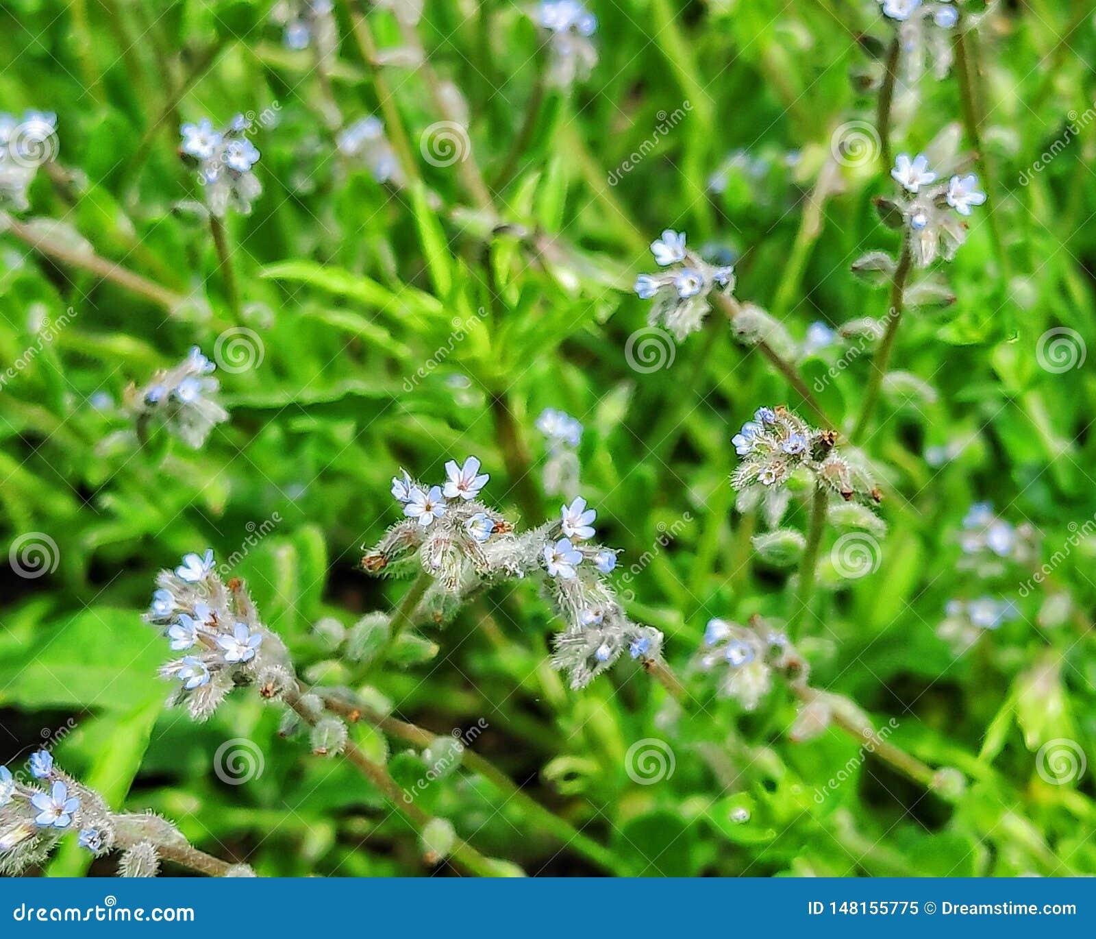 Wildflowers, flores bonitas e dia ensolarado