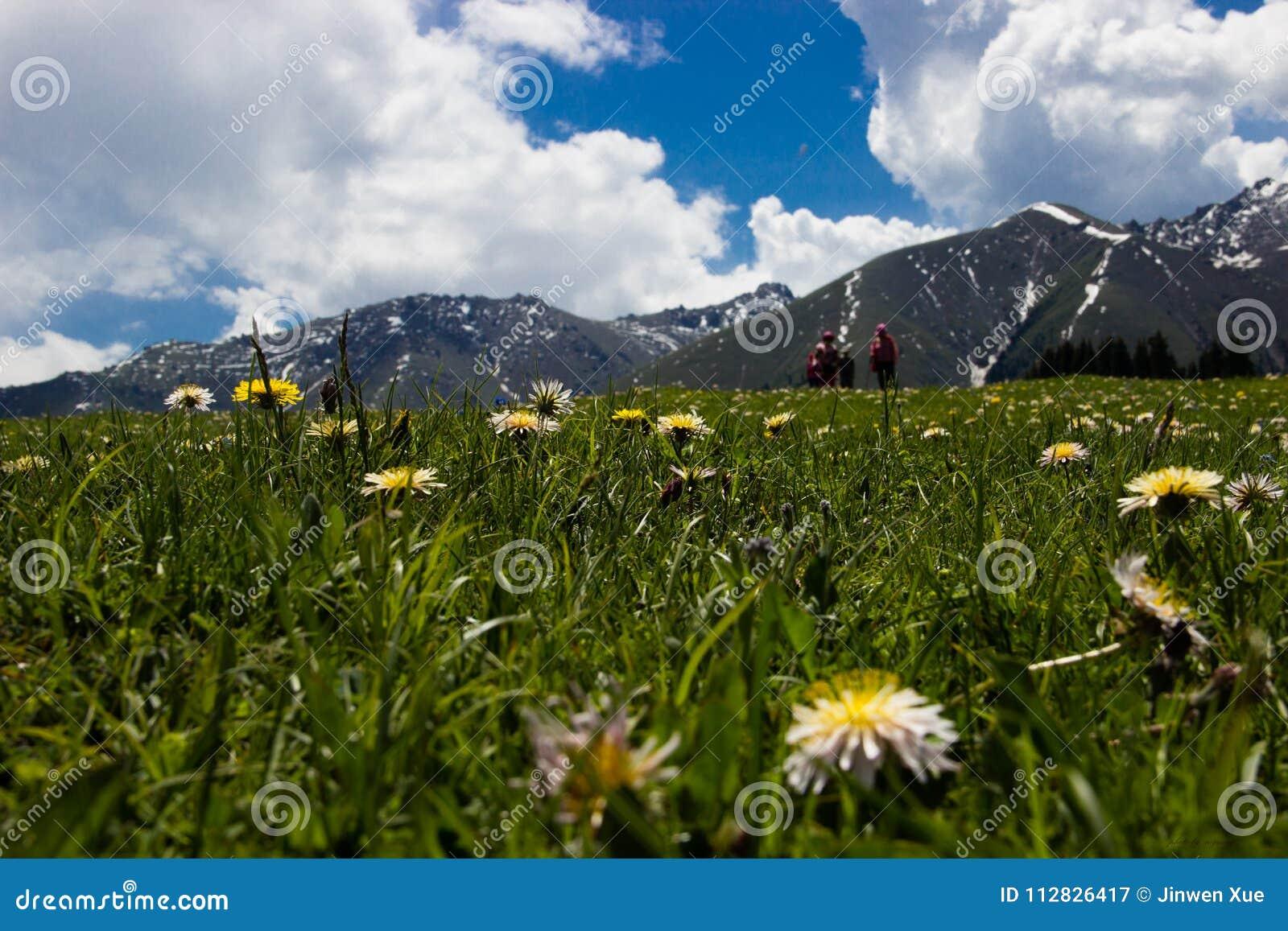 Wildflowers, grama, montanhistas