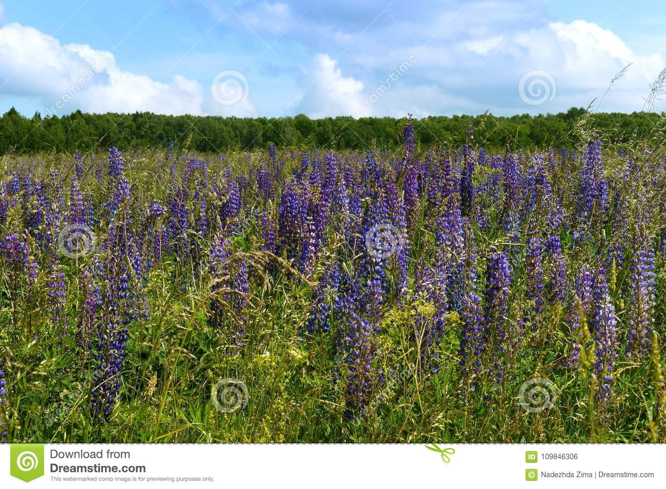 Wildflowers lilac and yellow and white meadow flowers and herbs download wildflowers lilac and yellow and white meadow flowers and herbs stock photo image mightylinksfo