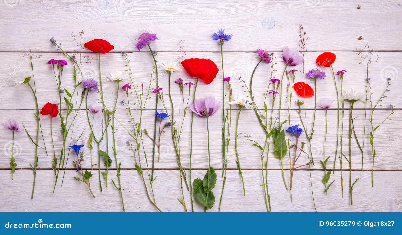 Wildflowers - maczek, chamomile, chabrowy, scabiosis