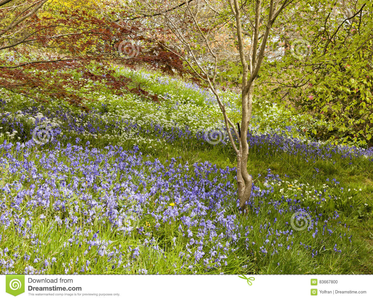 Wildflowers Meadow In A Spring Garden Stock Photo Image Of Leaves