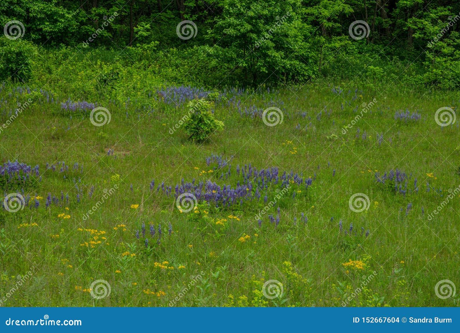 Wildflowers op een gebied in de lente