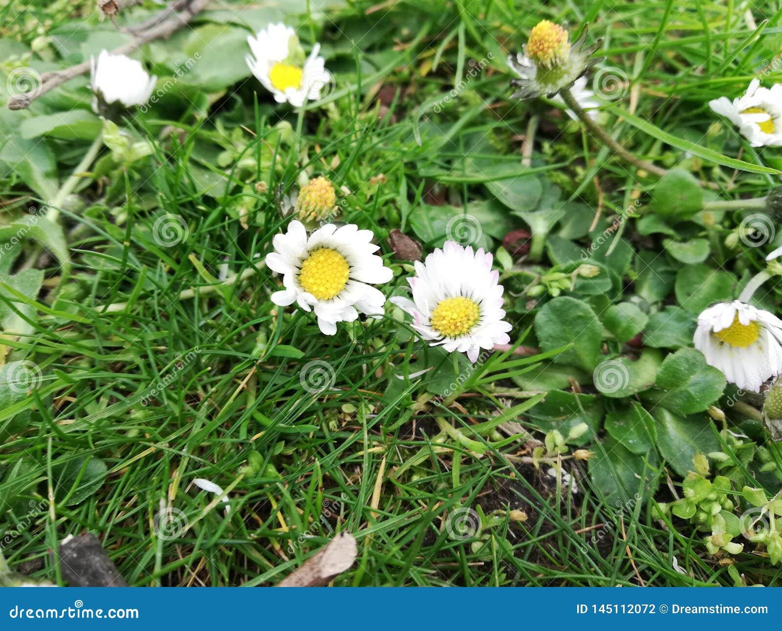 Wildflowers pequenos na estação de mola